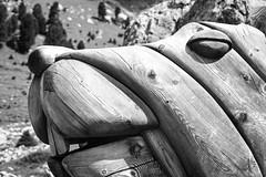 Billy Backe (chipsmitmayo) Tags: minolta xd7 adox silvermax 100 film analog adotech schwarzweiss blackandwhite labor 50mm f14 rokkor dolomiten südtirol latemar latemarium holz wood sculpture figur skulptur carving schnitzerei tier murmeltier groundhog