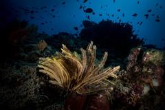 IMG_7387 (Gil Xavier) Tags: underwater scuba philippines canon fantasea g7xmk2 cebu moalbal turtlebay