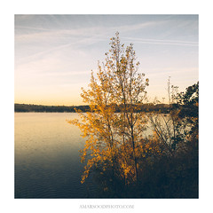 Autumn at The Lake (Amar Sood) Tags: amarsoodphotocom amarsoodphotography lake autumn sony a7rii landscape landscapes nikkor 247028 square 11 tree nature breath taking