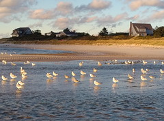 IMG_20181013_1734293 (Putneypics) Tags: capecod woodneckbeach falmouth ma autumn evening saltmarsh beach birds gulls putneypics
