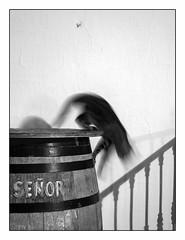 Señor el gato. 2/2 La fuite. (francis_bellin) Tags: ombres andalousie septembre chat cat nuit félin animal noiretblanc monochrome bw tonneau señorelgatoelgato 2018 espagne blackandwhite frigiliana