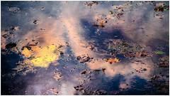Dragonfly Love... (Ody on the mount) Tags: abstrakt anlässe em5ii fototour libellen mzuiko6028 omd olympus spiegelung teich wasser abstract dragonflies mirror water