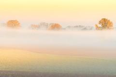Nebelschwaden im Herbst (stef7612) Tags: hattenhofen herbst nebel nebelschwaden herbstlaub baum bäume landschaft natur felder morgens bayern landscape nature autumn trees fog foliage field bavaria