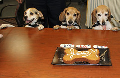 Three O'Hare Agricultural Canines Retire (CBP Photography) Tags: cbp customs border protection canine k9 dog puppy beagle retire retirment celebration