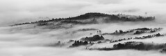 Val do Ulla (Noel F.) Tags: galicia galiza sony a7r a7rii fe 100400 gm val do ulla boqueixon neboa fog