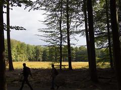 (Jeroen Hillenga) Tags: drenthe wandelen wandelaars hiking netherlands nederland natuur nature natuurgebied landscape landschap forest bos