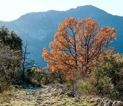 pointe de siricocca -2.jpg (jdufrenoy) Tags: pointe de siricocca alpesmaritimes côtedazur frenchriviera mountains paca landscape montagne paysage pointedesiricocca