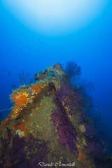 IMG_1422 (davide.clementelli) Tags: diving dive dives padi immersione immersioni ampportofino portofino liguria friends amici underwater underwaterlife sottacqua