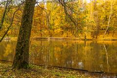 October in Tsaritsyno Park / Октябрь в Царицыно (Vladimir Zhdanov) Tags: autumn october landscape nature russia moscow tsaritsyno park forest tree pond water sky leaf