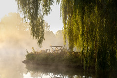 The morning after (Jannik Peters) Tags: mist fog willow lake reflection chairs mysterious atmosphere mood sunrise sony tamron 2875 28 rxd a7iii