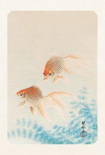 36-Carte postale // 10x15cm // Poissons Rouges