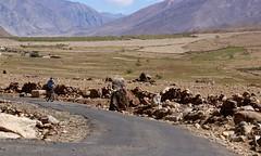 Between Padum and Sani Monastery (image: S Jigmet)
