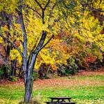 Autumn is here thumbnail