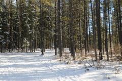 Kananaskis hike on a sunny day (davebloggs007) Tags: sugar mama trail fullerton loop kananaskis alberta canada 2018