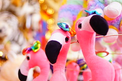 Color explosion (Nathalie_Désirée) Tags: toy teddy flamingo fair wasen pink bokeh oddsandends bitsandpieces smorgasbord hotchpotch color colors colour colours plush cuddly soft sonyalpha7rii rainbow rainbowcolors funny nice canon35mm pancake colorexplosion