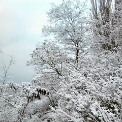 25552402 (aniaerm) Tags: snow ice frost