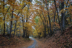 Sinking Creek Road (Notley Hawkins) Tags: httpwwwnotleyhawkinscom notleyhawkinsphotography notley notleyhawkins 10thavenue fall leaves woods columbiamissouri boonecountymissouri road tree forest gravelroad wood rural october 2018 canontse24mmf35lii sinkingcreekroad landscape outdoors morning
