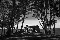 La Pointe Du Dourven ... (De l'autre côté du mirOir...) Tags: trédrezlocquémeau lapointedudourven arbre bois mer bretagne breizh brittany bzh fr france french nikon nikkor d810 nikond810 noiretblanc noirblanc blackwhite bw nb monochrome