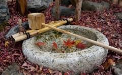 2018 - 0674 - JAPAN - Iwashimizu Hachimangu (Shiroseki) Tags: autumn fall colours japan kyoto stone tsukubai basin maple momiji bamboo water feature iwashimizu