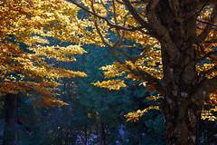 Tree (anderswetterstam) Tags: fall nature park plants seasons autumn tree garden leaves