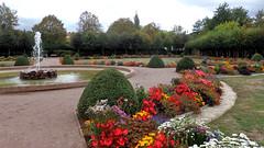 Im Schlossgarten (fotoculus) Tags: deutschlandalemaniagermanyduitslandalemanhagermaniaallemagnetyskland hessen odenwald erbach schloss schlossgarten flora cuphrea