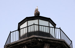 seagull perch (J Blough) Tags: lighthouse nyc rooseveltisland
