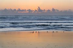 Roads End (pbandy) Tags: beach bird landscape ocean roadsend sunset waves wildlife oregon nature