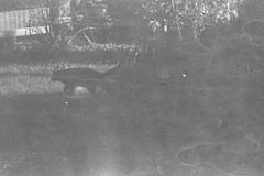 Der Schatten (Christian Güttner) Tags: analog analogue svartvitt sw schwarzweisfotografie schwarzweis kitty katze blackandwhite bw czarnobiale ricoh ricohkr10 ecodeveloper 35mm outdoor umwelt film monochrome schatten