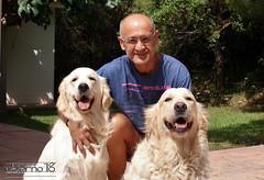 En familia (Ubierno) Tags: perro chien dog madra الكلب 狗 σκύλοσ כלב 개 कुत्ता hond hund kutya köpek สุนัข cão собака ubierno alma golden retriever goldenretriever cachorro puppy bimba