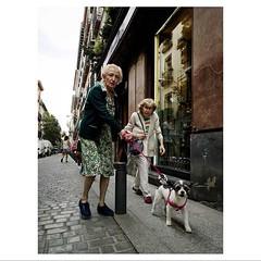 Triple eye contact . . #HuaweiP20Pro #Snapseed #OOO #Seemooore . . @lacalleesnuestracolectivo #lacalleesnuestracolectivo (luisonrh) Tags: streetphotography streetphoto documentary digital candid gente people mobile mobilephotography huaweip20pro dog perro