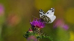 13 (andrzejreschke) Tags: insects reptiles plants grass nature butterfly lizard moss flowers beauty beautyofnature