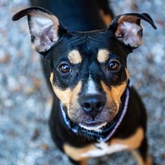 Pigtails13Oct2018103.jpg (fredstrobel) Tags: dogs pawsatanta atlanta usa animals ga pets places pawsdogs decatur georgia unitedstates us