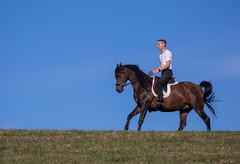 Basim_OS180124 (OliverSeitz) Tags: elbasim wachlarz elda arabian vollblutaraber pferd tier