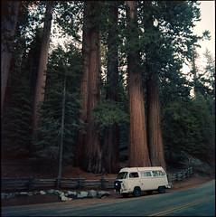 SL66.400NC.201810.14 (zampras) Tags: kokak portra 400nc rolleiflex sl66 504 distagon planar or sequoia national park