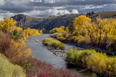 River of gold (BDFri2012) Tags: gunnisonriver river clouds cloudy fallcolor fallcolors fall trees colorado landscape outdoors outside stormy