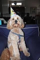 Squishy it's my birthday