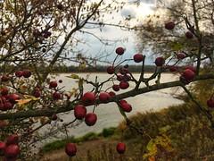 Widok na Wisłę (basiamarcisz) Tags: przyroda nature natura mazovia mazowsze wisła