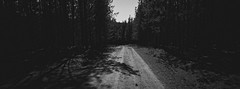 Belanglo State Forest iv (@fotodudenz) Tags: hasselblad xpan film rangefinder 30mm ultra wide angle panorama panoramic 2018 35mm ilford xp2 super sydney nsw new south wales australia belanglo state forest trees eerie