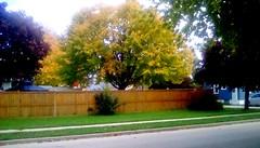 Autumn Neighborhood - HFF (Maenette1) Tags: autumn tree fence neighborhood menominee uppermichigan happyfencefriday flicker365 allthingsmichigan absolutemichigan projectmichigan