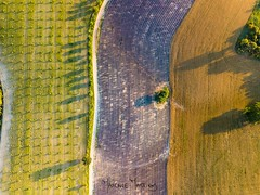 Field Flag (maxence.martinod) Tags: dji drone lavande mavicpro paysage valensole provence