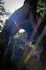 the root is the gate (karsten-the-coleoid) Tags: natur nature naturfotografie naturephotography tree roots baum baumstamm trunk wurzel legacylens lensflare