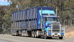Lachlan KENWORTHs (1/3) (Jungle Jack Movements (ferroequinologist)) Tags: kenworth cabover lachlan valley way hume highway bowning two blue scott boxsell cootamundra blackie mout gambier hp horsepower big rig haul haulage freight trucker drive transport carry delivery bulk lorry hgv wagon road nose semi trailer deliver cargo interstate articulated vehicle load freighter ship move roll motor engine power teamster truck tractor prime mover diesel injected driver cab cabin loud rumble beast wheel exhaust double b grunt refrigerated freightways