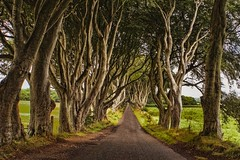 the dark hedges (-liyen-) Tags: northernireland darkhedges path countyantrim trees beechtrees rural field gameofthrones challengeyouwinner