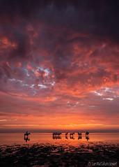 Colours of the Camargue (Sue MacCallum-Stewart) Tags: camargue oceancapture whitehorses france seascape sunrise clouds horses