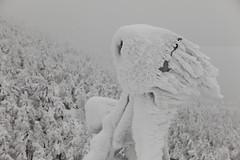 Cold light (Elios.k) Tags: horizontal outdoors nopeople harshenvironment freezing cold zaoropeway zaoskiresort snow zaosanchostation winter frozen light floodlight ice icecrystals frost hoarfrost weather visibility mountain trees coveredinsnow juhyo snowmonster fir forest sky white dof depthoffield focusinforeground backgroundblur colour color travel travelling vacation december 2017 canon 5dmkii camera photography zao mountainzao mtzao zaoonsen zaōonsen mountzao skiresort yamagataprefecture tōhokuregion tohoku honsu asia japan
