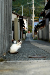 cat (NEKOFighter) Tags: cat neko nikon d500 ねこ 猫