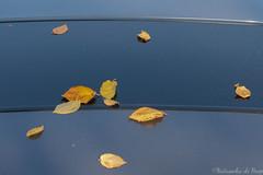 (The Joy of Now Photography) Tags: natasschadehoop autumn herfst herfstbladeren autumnleaves blue blauw eenvoud simplicity contemplativephotography contemplative goodeye openingthegoodeye miksang miksangphotography