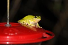 Michael row your boat ashore (Sam0hsong) Tags: hurricane frog northcarolina
