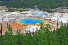 IMG_3413 (gabi gruia) Tags: 7dii yellowstone national park grand prismatic spring pine tree blue