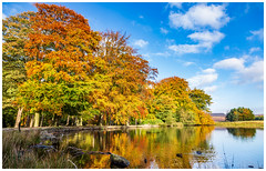 Basking in the morning sun (Ian Emerson (Thanks for all the comments and faves) Tags: autumnal autumn pond water longshaw derbyshire colourful clouds reflection trees golden canon 6d nationaltrust october
